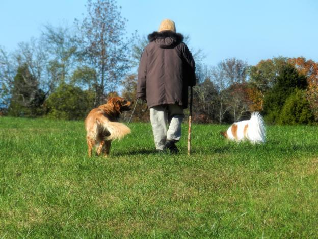 Walking dogs DSCN6249